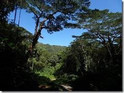 ハワイ・マノアの滝