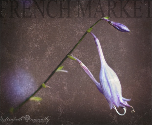 FrenchMarketFlowersWM