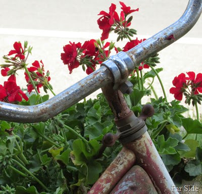 Bike with geraniums