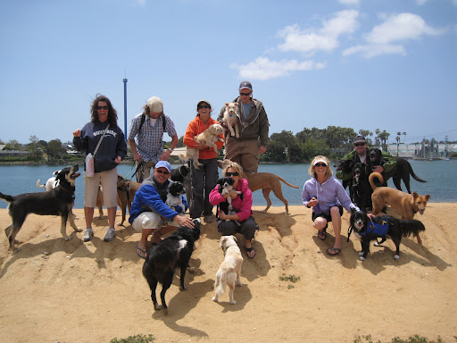 What's a day at the beach without a bunch of rescued pooches and their humans?