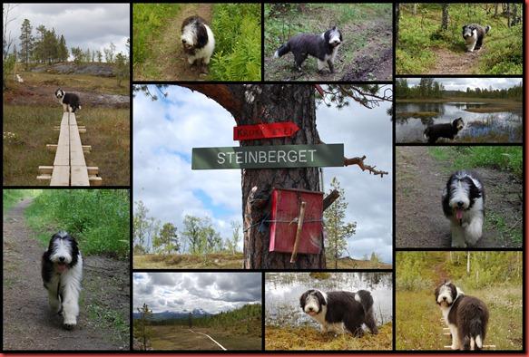 2012-06-28 steinberget1