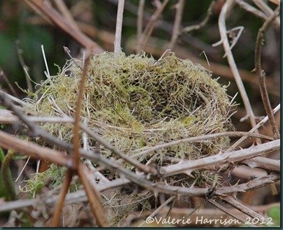 53-nest-in-brambles