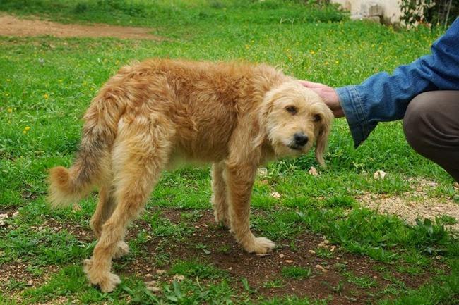 Γνωρίζει κανένας αυτό το σκυλάκι;