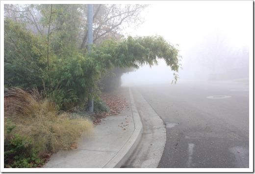 121211_fog_44