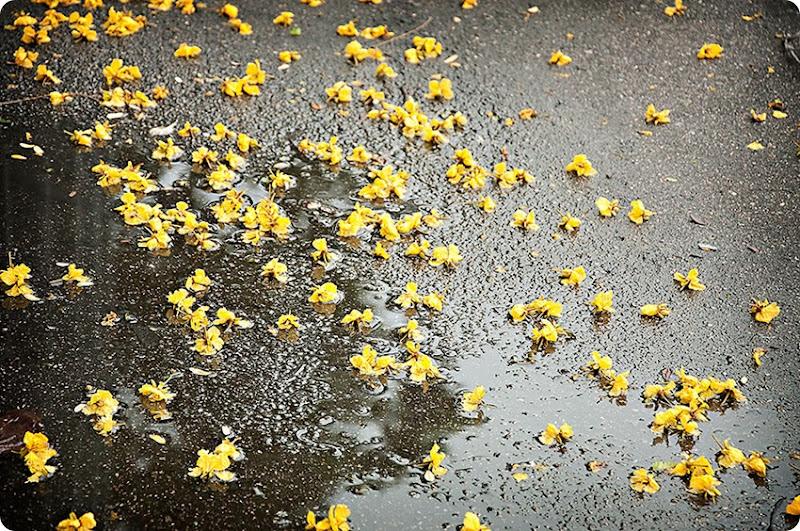 Yellow-flowers-(3)