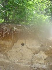 kingfisher hole2