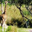 Orlando FL - Animal Kingdom