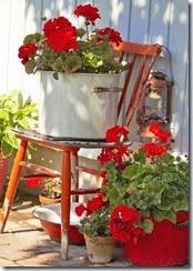 flores vermelhas geranios