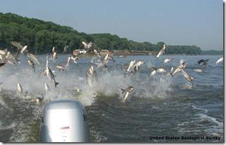 Silver Carp USGS