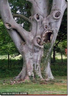 TreeswitMA29079731-0012