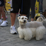 Pet Express Doggie Run 2012 Philippines. Jpg (240).JPG