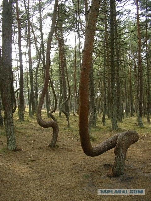 Dancing Forest:near national park in the Baltic Sea