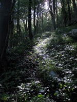 Jutranji sončni žarki v gozdu