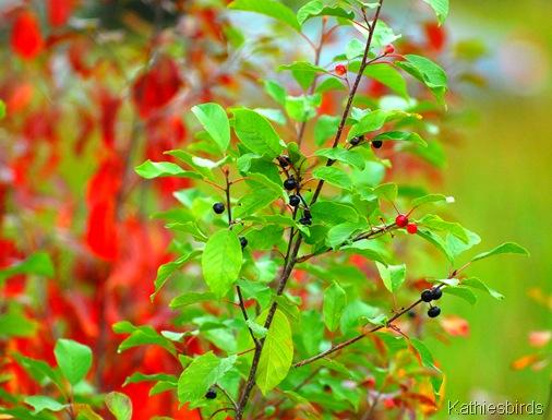 19. autumn prelude-kab