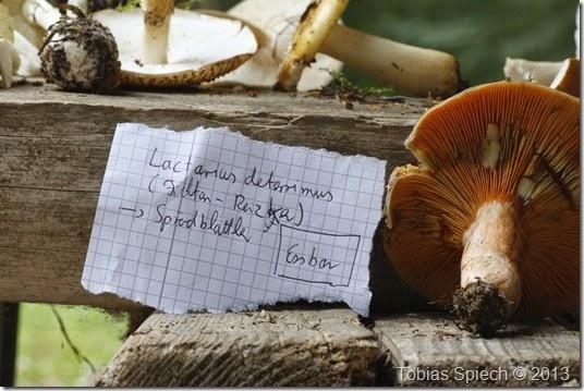 Lactarius deterrimus