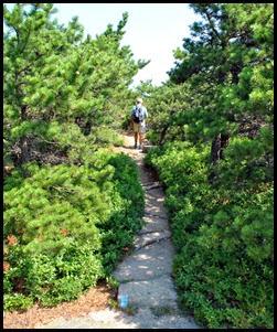 04b - North Ridge Trail - heading down the mountain