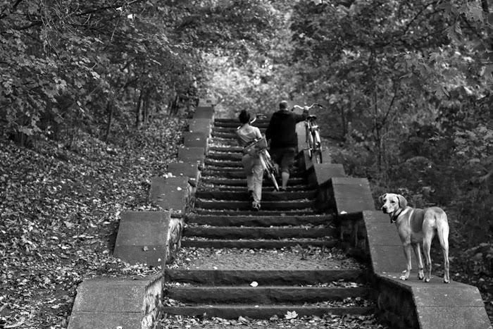 bikes dog stairs