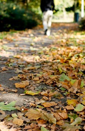 Fall-Oct12-0011