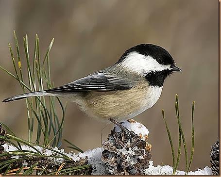 kartinki24_bird_0011