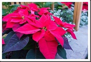2011Dec31-Brookside-Gardens-36