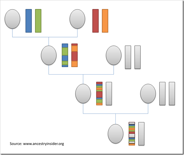 In each successive generation, half the DNA of the grandparents is lost.