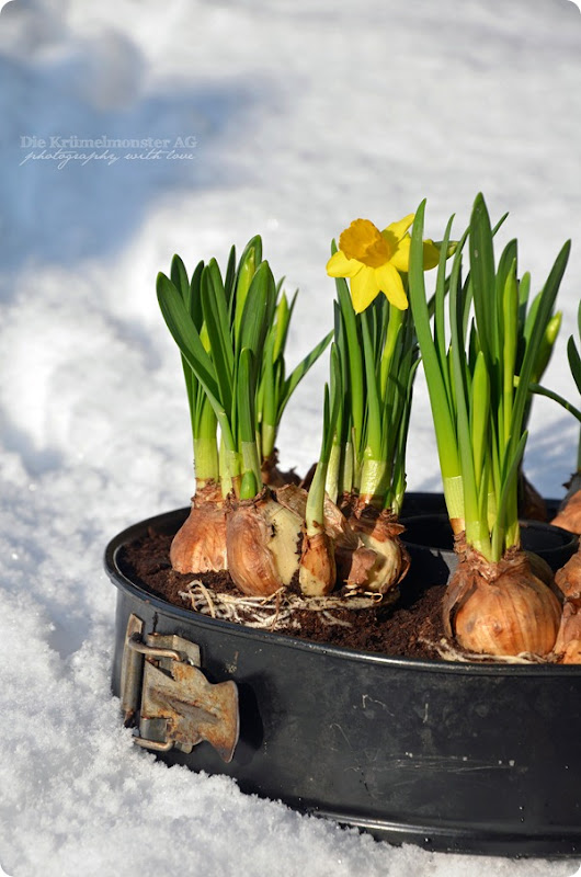 DIY Frühlingskuchen (7)