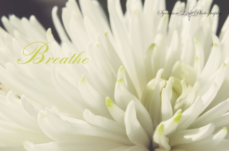 Breathe-1-web-SycamoreLane Photography