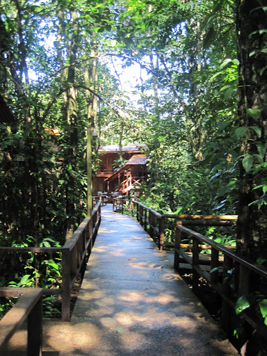 Elevated walkways at the jungle lodge