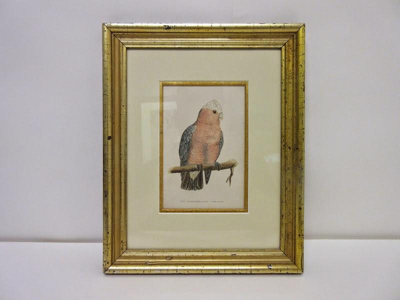 Audubon Style Etching