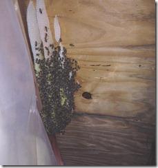 Beesinahouse