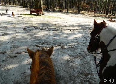 horseback ride 71