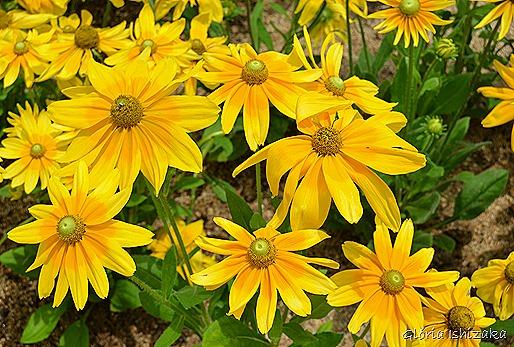Glória Ishizaka - Flor amarela 23