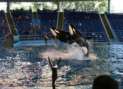 Sea World (25)
