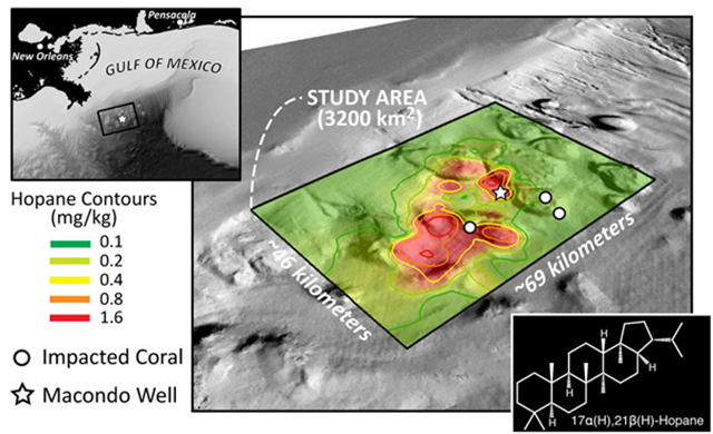 Based on their analyses of seafloor core samples around the Macondo well (white star), David Valentine and his colleagues mapped hopane contamination across a nearly 3,200 square kilometer region of seafloor. At least one coral reef (white circle) lies within the region of higher oil contamination. Graphic: G. Burch Fisher