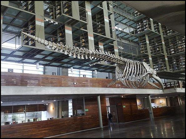 Bibliothèque José Vasconcelos, Mexico DF