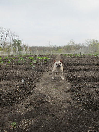 Yoo-hoo, Ryan!  I'm here to help plant the Chicken Salad!