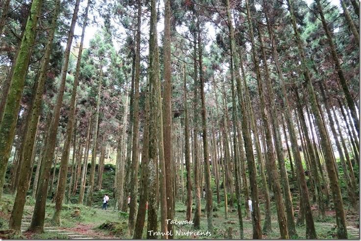 三峽熊空茶園 (31)
