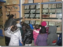 μουσείο φυσικής ιστορίας ΔΕΛΑΣΑΛ (2)