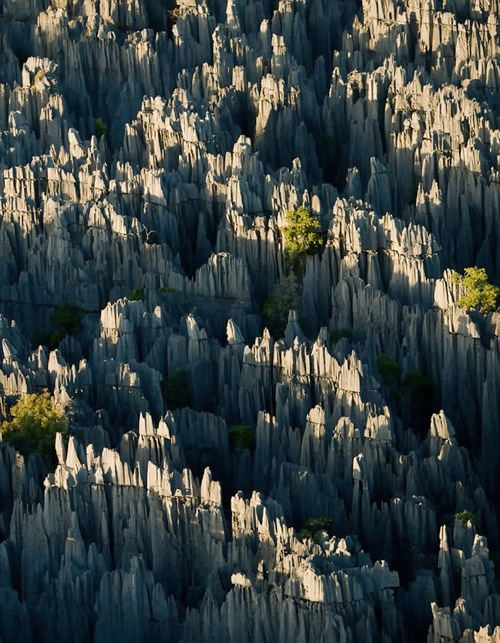 stone-forest-03 (1)