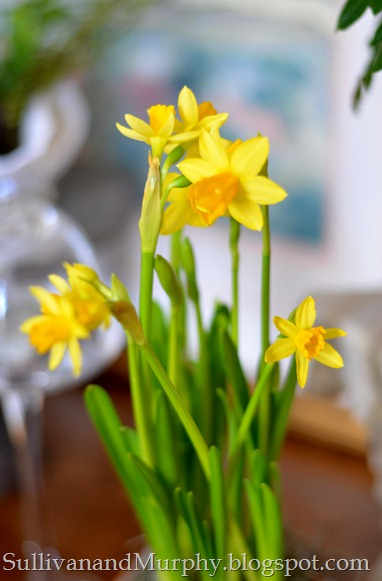 daffodils4