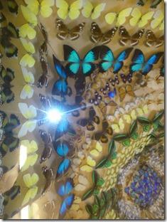 Butterfly House Ayr 3