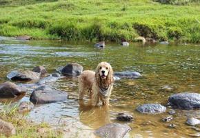 Dogs Trekking 6 (114_1) (23)