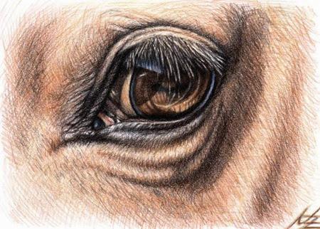 horse eye by nicole zeug