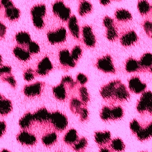 2011 Google Terms - Download Picasa - Launch Picasa -Neon Pink Leopard Print Wallpaper