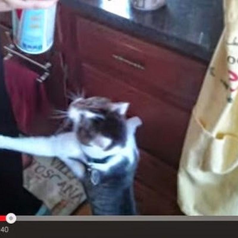 Γάτες λατρεύουν την σαντιγί