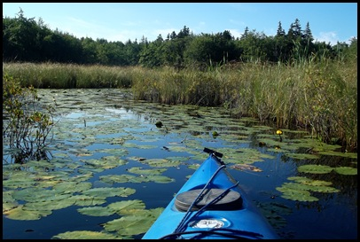 Kayaking Seal Cove Pond 050
