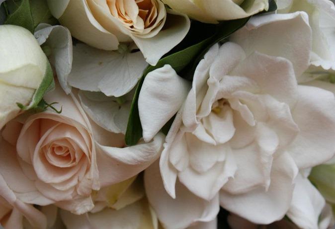 gardenia 319362_10151136466030152_1954424420_n flora organica designs