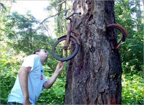 American tree has eaten this bike over the course of several decades