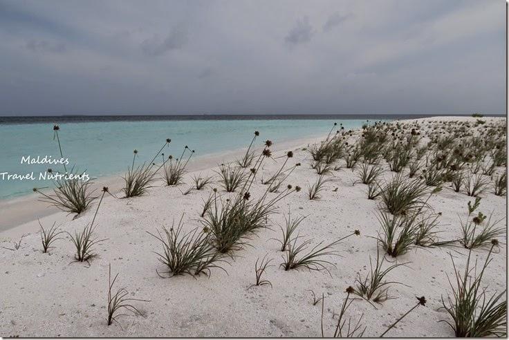 馬爾地夫 野餐島 浮潛 (44)
