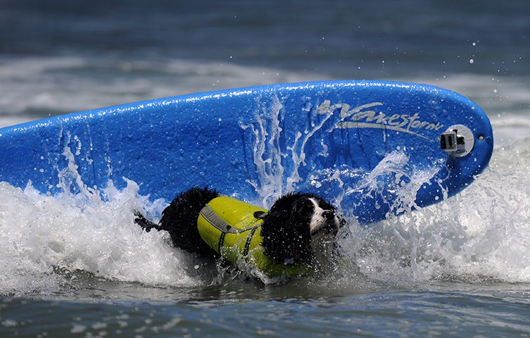 6th-surf-dog-comp10